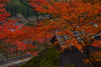 晩秋の色彩