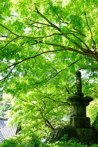 新緑輝く頃