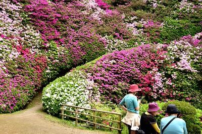 感動の花広場