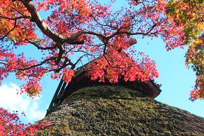 草庵の紅葉