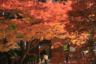 紅葉の山門