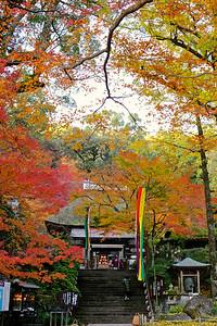秋の彩りに包まれて