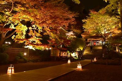 光が織りなす秋の情景