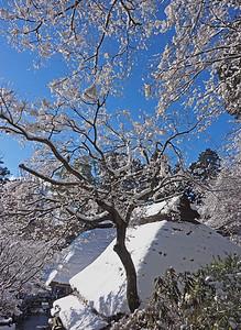 満開の雪花