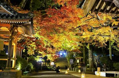 大興善寺ー秋の輝きー