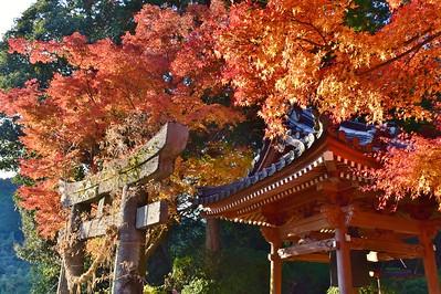 神仏習合 寺の秋