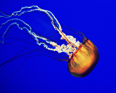 jellyfish/060512