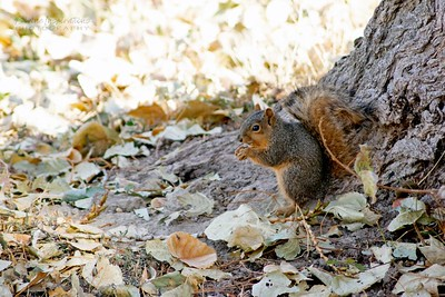 squirrel/009693