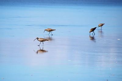 beach birds/100519