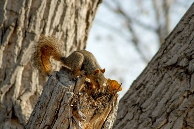 squirrel/009677