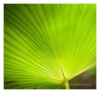 Havana Palm Frond