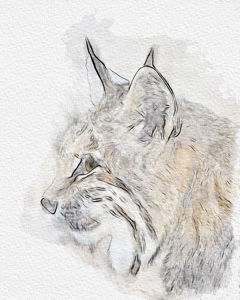 """""""Tufted Ears Watercolour II""""  A watercolour done using a Wacom tablet and the Adobe Watercolour Assistant. This is a variation using smaller brushes and more blending.   <a href=""""http://tinyurl.com/TuftedEarsOriginal"""" target=""""_blank"""">Tufted Ears Original</a> </p> The original photo of the bobcat (Lynx rufus) was taken at the Living Desert Zoo and Gardens State Park in Carlsbad, New Mexico, USA."""