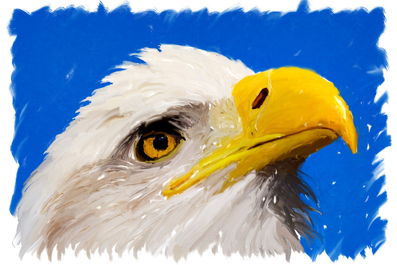 """""""Patriot""""<br /> <br /> Done with the mixer brushes in Photoshop and a Wacom tablet. I'm trying out various techniques for the mixer brushes. Each one yields a different look to the painting. The original image was taken at the Rocky Mountain Raptor Program in Ft. Collins, Colorado. Taken under controlled conditions."""