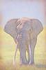 """7 Tons of Elephant"""