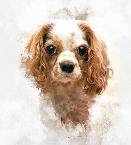 Cavalier King Charles spaniel mixed media portrait