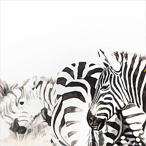 Zebra herd digital painting