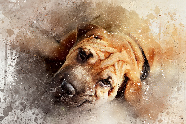 Mixed media portrait of a young Shar pei dog