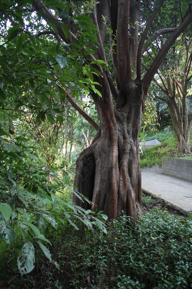Jinghong, Manting park