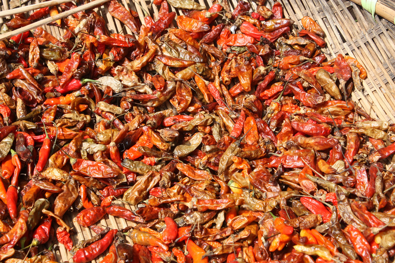 Red (very) hot chili pepper drying