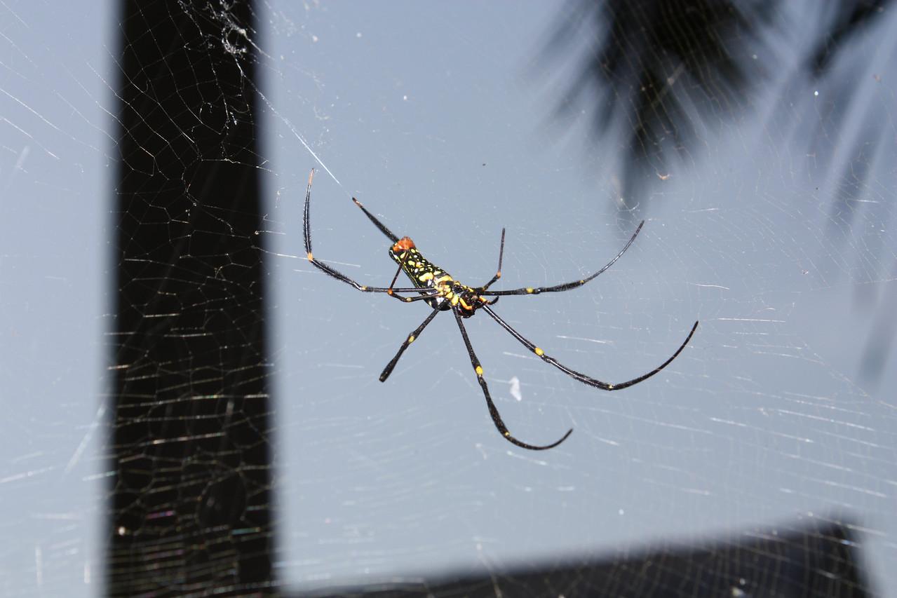 Jinghong, spider at the park