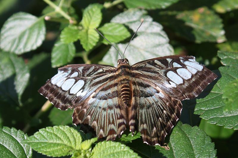 Jinghong, Wild Elephan Valley, Butterfly
