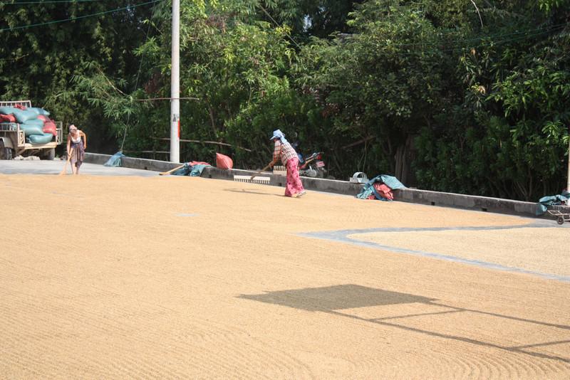 Ghasa, drying the rice