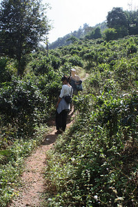 our trekking path is getting steep!