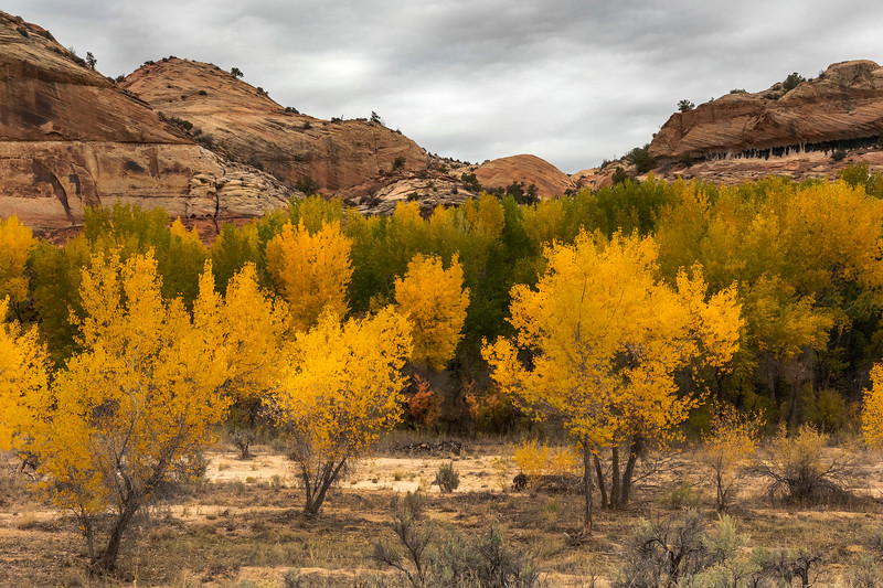 Fall colors along the trail to the Escalante Arch