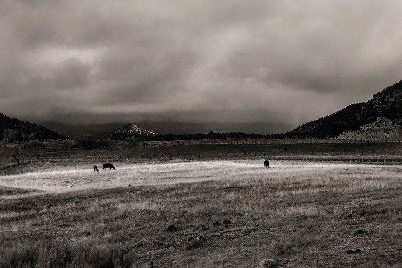 Sun shining on grazing cattle in the rain; near Boulder, Utah