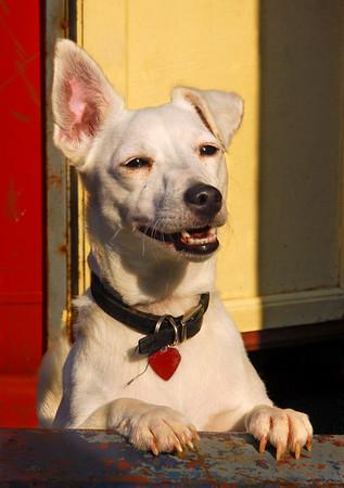 Narrowboat dog
