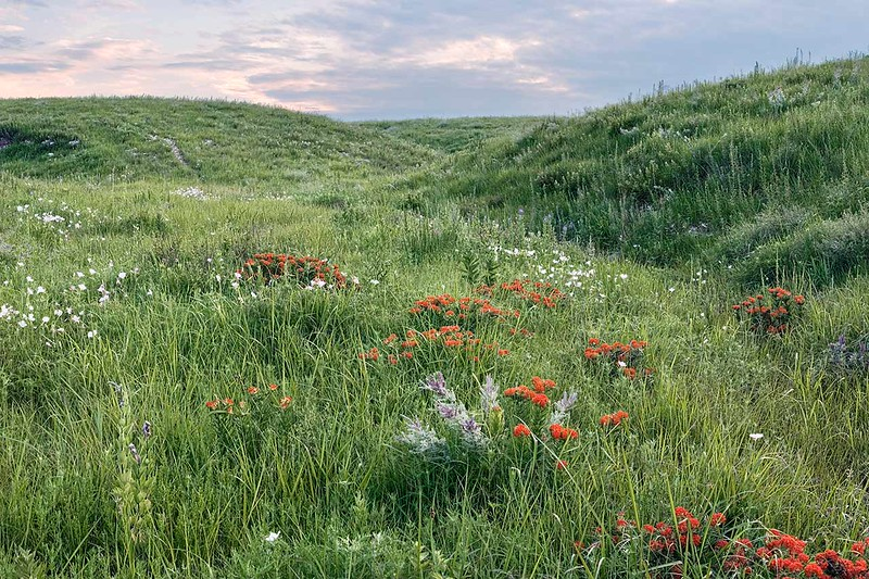 Flint Hills June Wildflowers