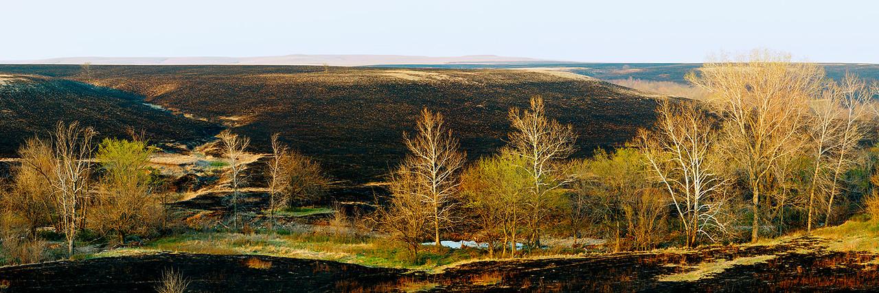 Black Hillside, Budding Trees
