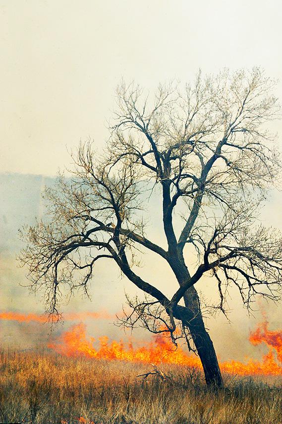 Burning Grass, Budding Tree