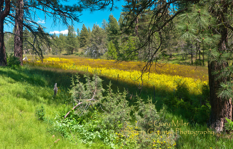 Spring fed flowers flourish near Fossil Oregon - July 2011 - Photo by Gary N. Miller - Sisters Country Photography