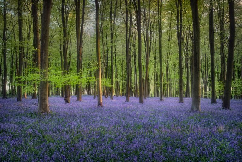 Embley Wood, Hampshire 2018