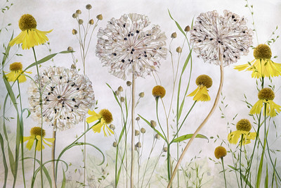 Allium and Helenium