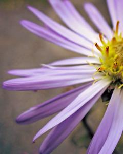 flower/060612 **