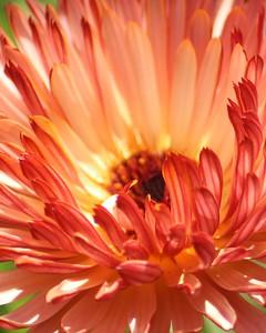 flower/009988 **