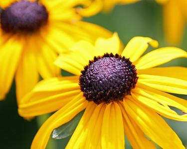 flower/072911 **