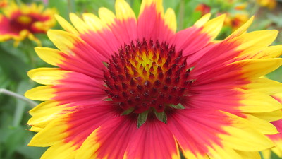 flower/090513 **