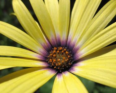 flower/011310 **