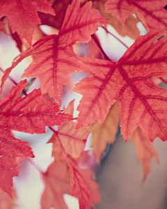 AUTUMN LEAVES **
