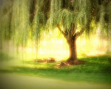 tree/004453 **