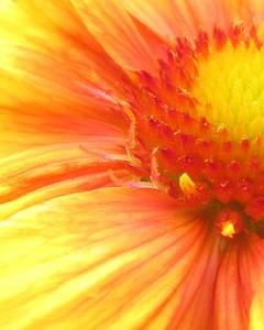 flower /000171