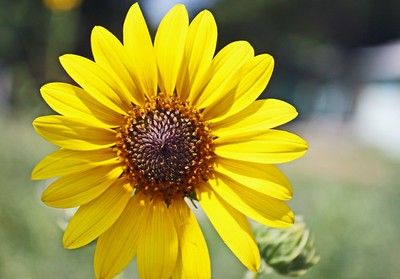 flower/000002