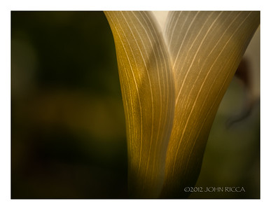 Cala Lilly Abstract