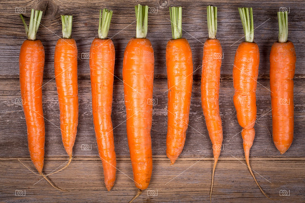 Trimmed carrots in a row