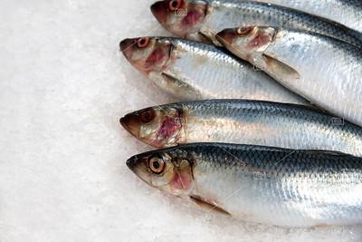 Sardines on ice