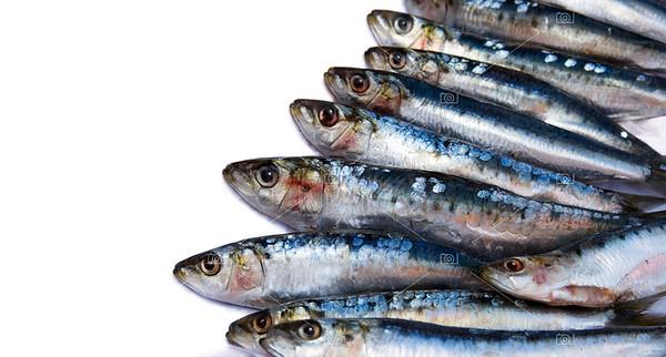 Sardines on white