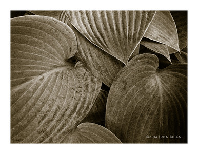 Autun Leaves 2
